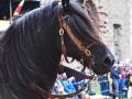 Emmas häst