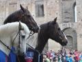 Hästar 3